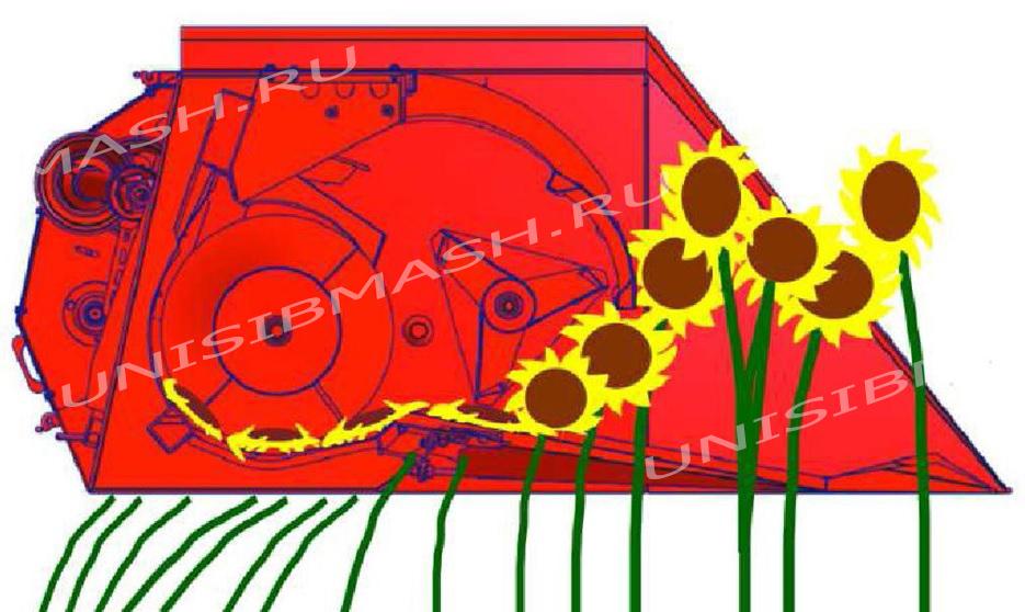 Принцип работы жатки НАШ-7,4 безрядковой для уборки подсолнечника